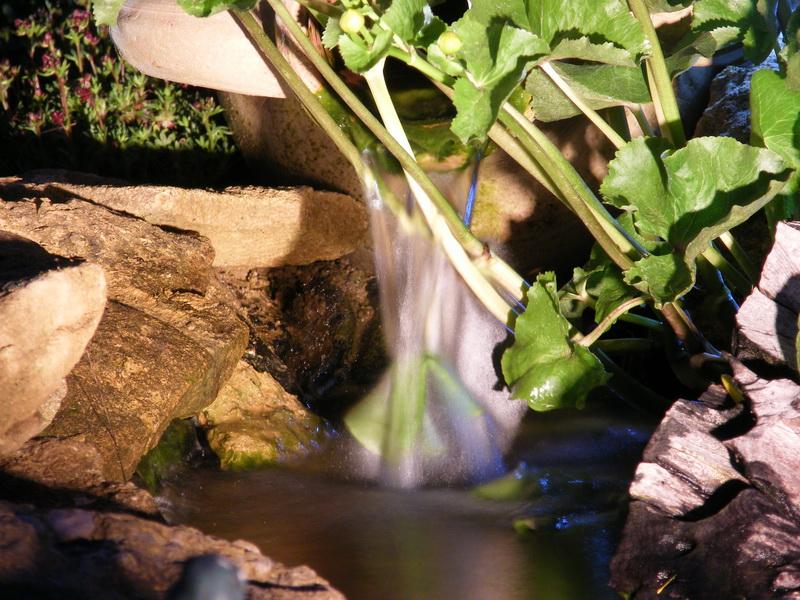 Votre photo pour Décembre 2009 - Page 3 874996DSCF18m91