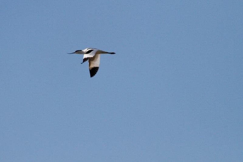 Parc ornithologique du Marquenterre 908252Marquenterre_Avril_2010_RAW_391_DxO_raw__800x600_