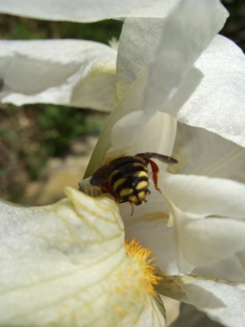 Mon jardin et moi... - Page 2 945727Printemps_2010_009