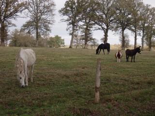 FOREVER (notre mascotte) - Connemara X SF né en 1994 - adopté en novembre 2009 par sophie-france - Page 2 955737photos_novembre_2009_078