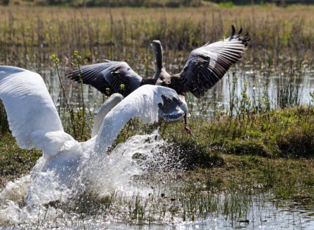 Parc ornithologique du Marquenterre 963744Marquenterre_Avril_2010_RAW_291_DxO_raw__800x600_