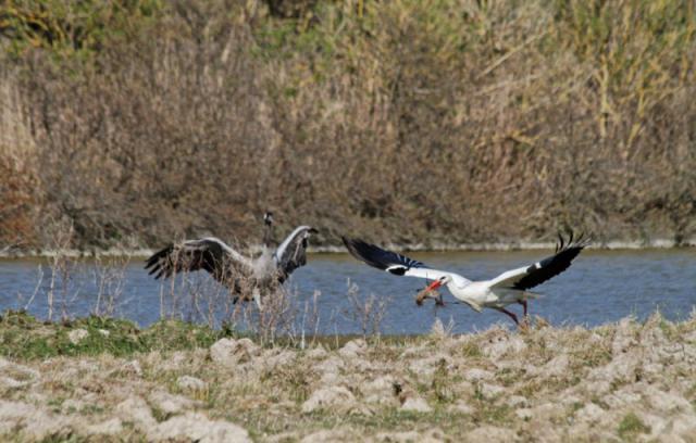 Parc ornithologique du Marquenterre 975421Marquenterre_Avril_2010_RAW_364_DxO_raw__800x600_