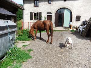 (Dept 71) Bony, ONC,  Sauvée par deejee ! (Juin 2010) décédée Mini_395099B4