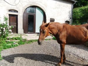 (Dept 71) Bony, ONC,  Sauvée par deejee ! (Juin 2010) décédée Mini_458239B6
