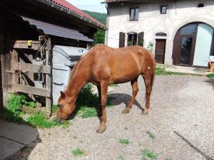 (Dept 71) Bony, ONC,  Sauvée par deejee ! (Juin 2010) décédée Mini_485287B2