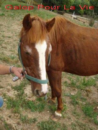 BANQUISE - ONC poney présumée née en 1984 - adoptée en novembre 2009 par Istorienne  10973banqui11