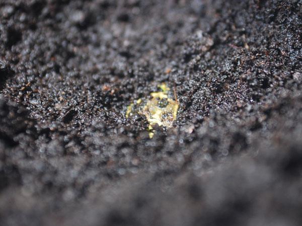 Ma grenouille s'est enterrée !!! 113799gloumbi_dodo_2