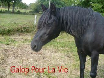 CACAO  - OI  née en 1989 adoptée en octobre 2011  139020cacao410