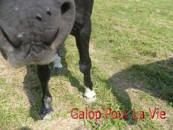 CACAO  - OI  née en 1989 adoptée en octobre 2011  25887cacao_10