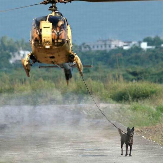 (JEU) MOI QUAND...... 266379moi_quand_je_promene_mon_chien