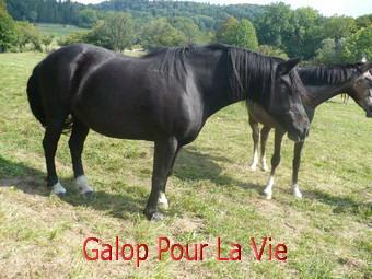 CACAO  - OI  née en 1989 adoptée en octobre 2011  26649cacao210