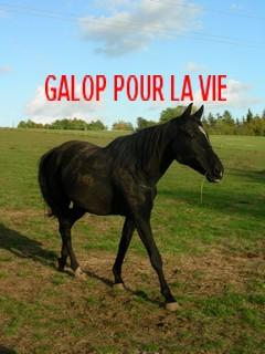 LANCELOT Espagnol OI noir - placé hors association 295634Lancelot_couvert_de_boue