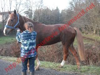 DEESSE GPLV - ONC selle née en 1989 -  adoptée en janvier 2011 par Maurice - Page 4 302573photos_janvier_2010_256