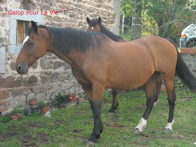 CATHY - TF née en 1990 - adoptée en août 2010 par ch.lambert 309055cathie