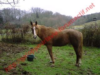 DEESSE GPLV - ONC selle née en 1989 -  adoptée en janvier 2011 par Maurice - Page 4 398286Photo0072