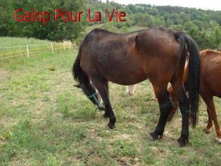 EMMA OI selle français 17 ans, non montable -placée hors association 402591emma110