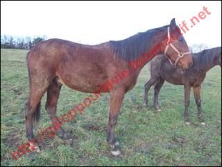 URANUS - ONC typé TF né en 2008 - adopté en février 2010 436870Sans_titre_18