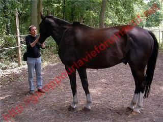 DARLING DU COTEAU 18 ans  - retournée chez son ancienne propriétaire 456172photo_10