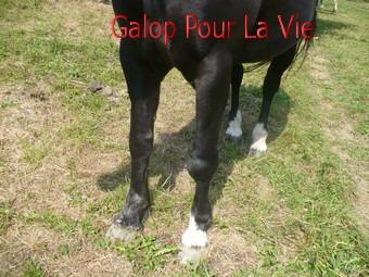 CACAO  - OI  née en 1989 adoptée en octobre 2011  502103cacao_11