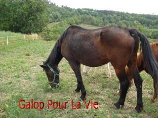 EMMA OI selle français 17 ans, non montable -placée hors association 677726emma10
