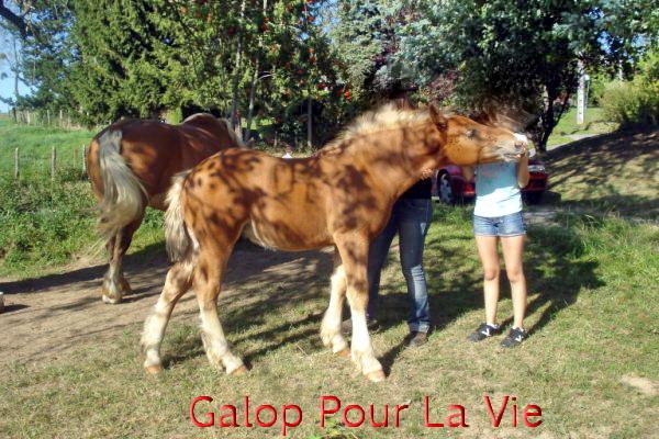VENUS - trait Comtois - annonce désactivée 678683venuss6
