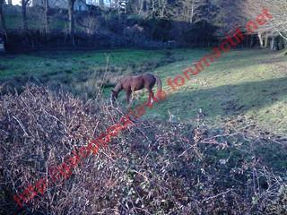 DEESSE GPLV - ONC selle née en 1989 -  adoptée en janvier 2011 par Maurice - Page 4 697163Photo0089