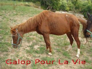 BANQUISE - ONC poney présumée née en 1984 - adoptée en novembre 2009 par Istorienne  83195banqui10