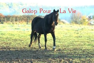 Vent d'Amour, SF 22 ans - adopté en décembre 2009 par lunarosa24 866151vent_d__amour1
