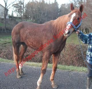 DEESSE GPLV - ONC selle née en 1989 -  adoptée en janvier 2011 par Maurice - Page 4 868015photos_janvier_2010_258