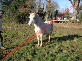 TRIVOLITE dite TULIPE - poney née en 1985 - adoptée en mai 2012 par Malou50 908401Sans_titre_6