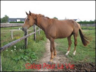 POCKET - TF né en 2003 - Adopté en septembre 2009 par katywilltrans 973609pocket6