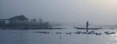 Sương sớm vùng quê Vd67