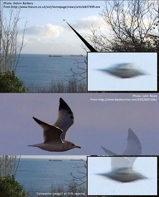 Photos troublantes ! Cornwallseagullbylouzuc