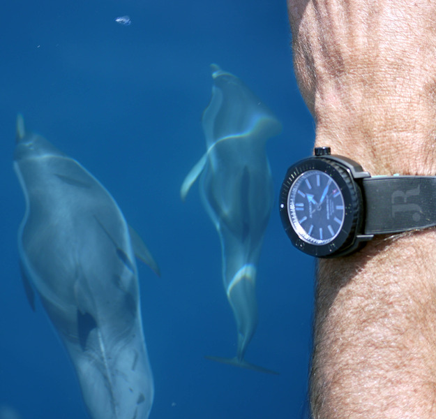"""Dauphins, baleines en Méditéranée et Aquascope """"Black & White"""" 5bOIVz"""