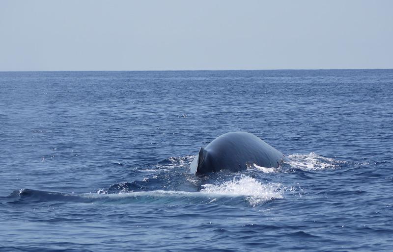 """Dauphins, baleines en Méditéranée et Aquascope """"Black & White"""" E93NEB"""