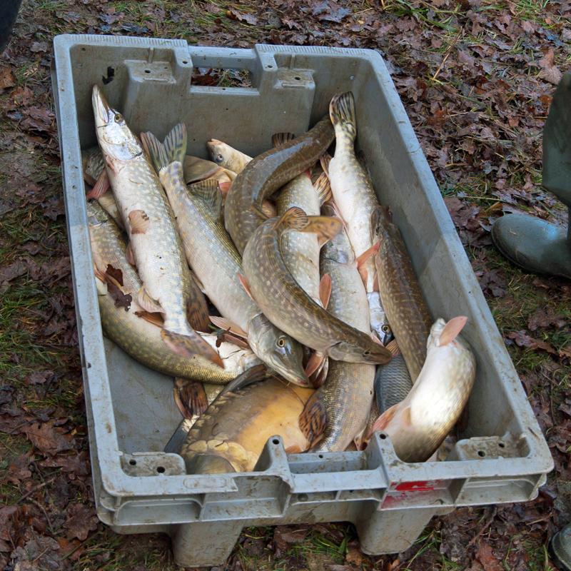 Une pêche d'étang en Sologne MgzfpS