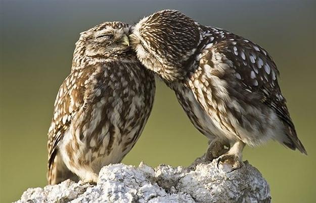 Tình yêu đẹp của loài vật 59912570