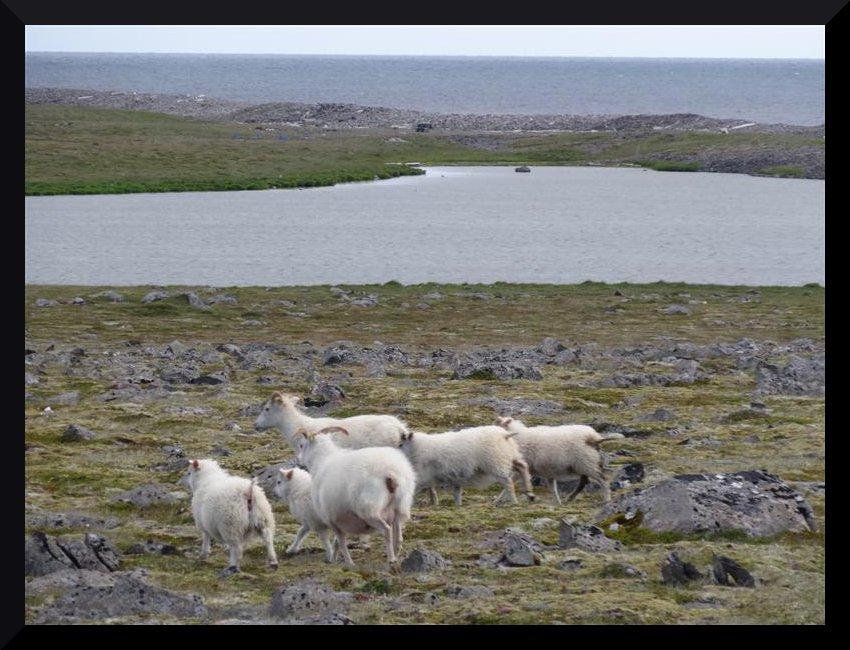 [ISLANDE] La grande aventure íslanðaíse des Crítícákouátíque - juillet 2013 Xywf