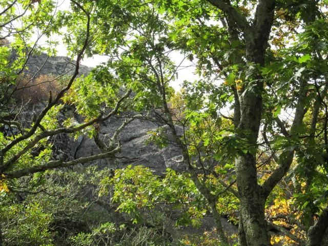 Crabtree Falls VPxBfG