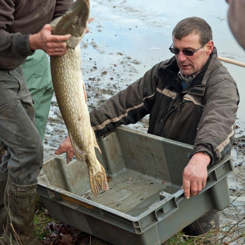 Une pêche d'étang en Sologne MtTwzR