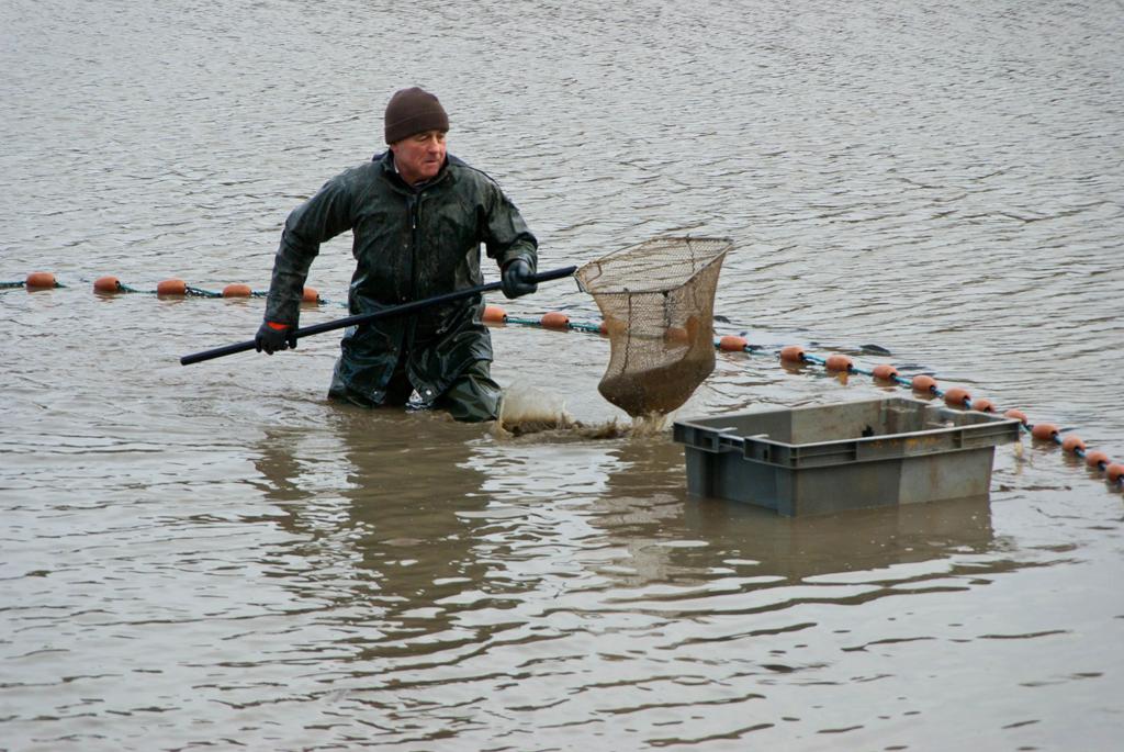 Une pêche d'étang en Sologne NDEgSN