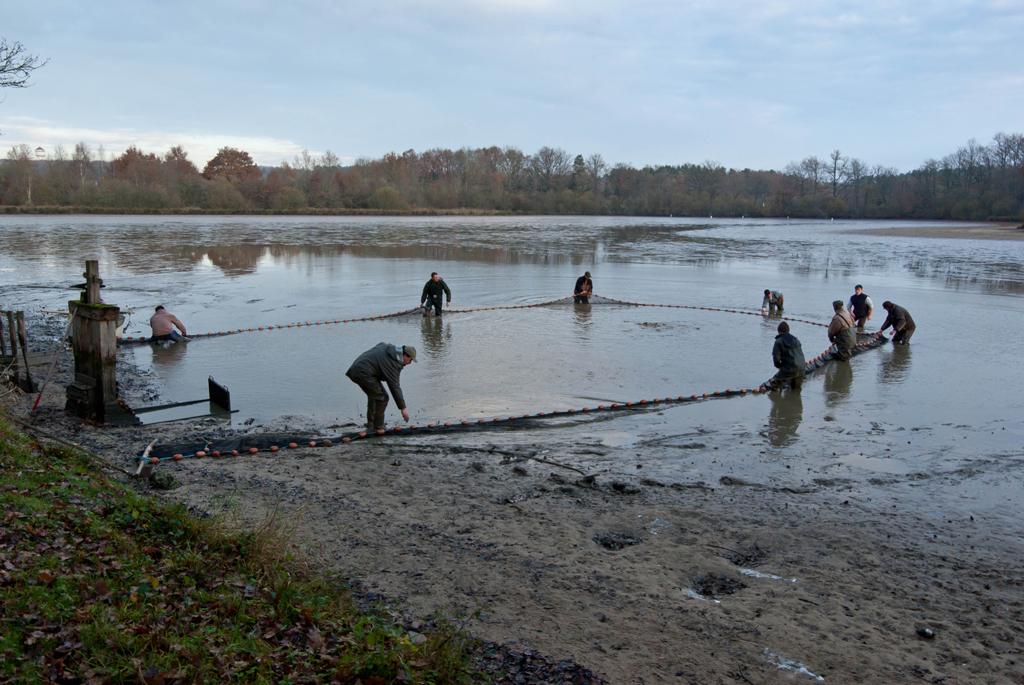 Une pêche d'étang en Sologne JjM8Ea