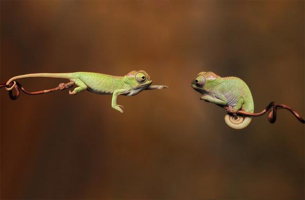 Tình yêu đẹp của loài vật 48140573