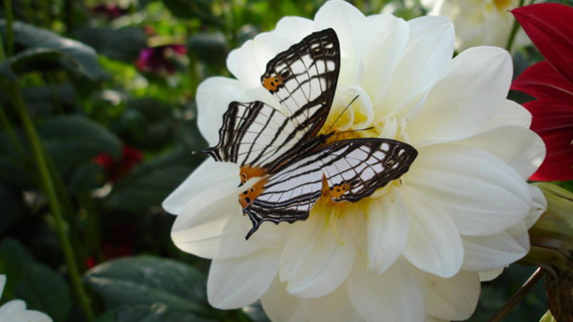 Hoa và Bướm Gmlj
