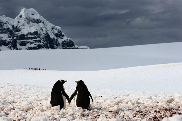 Tình yêu đẹp của loài vật 28079229