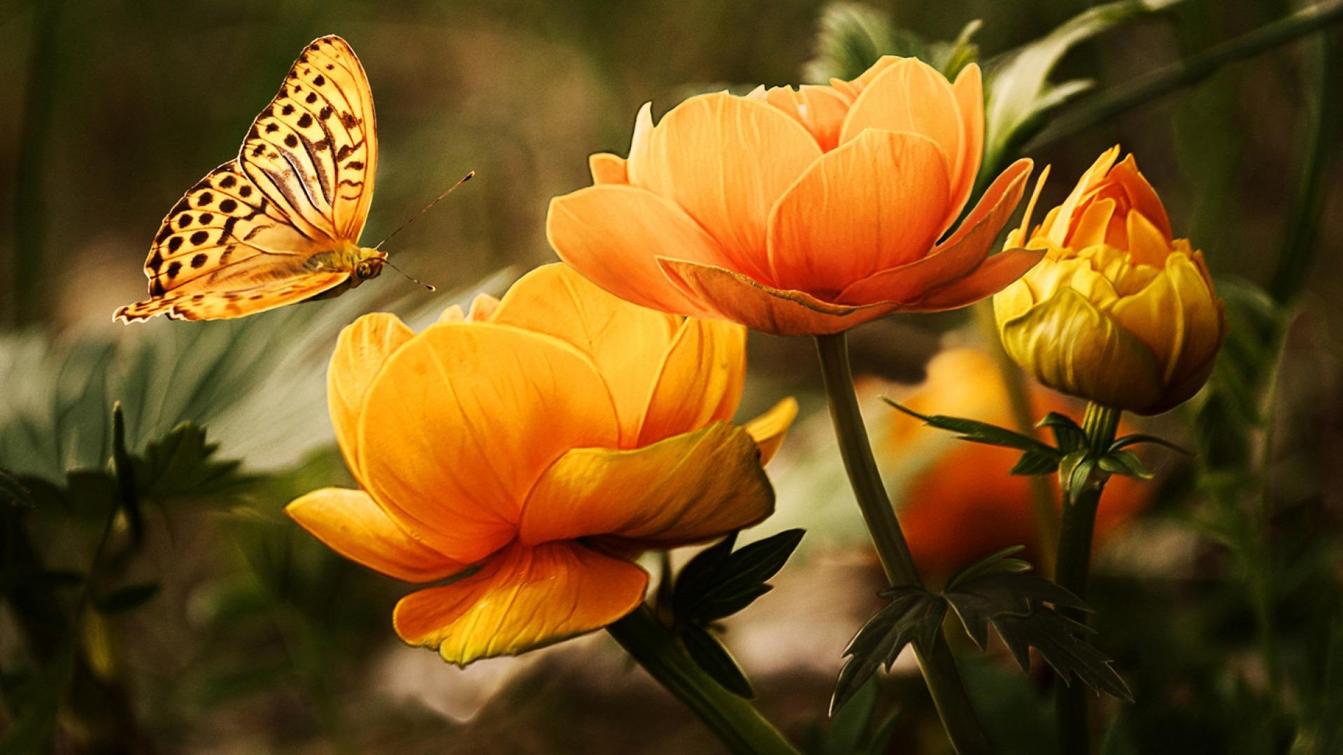 Hoa và Bướm Pgr8