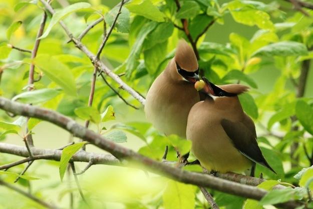 Tình yêu đẹp của loài vật 88913214