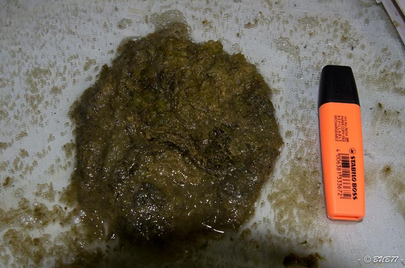 DIY - Fabrication d'un ATS Algae Turf Scrubber Bym4