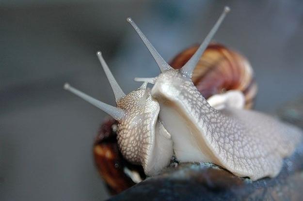 Tình yêu đẹp của loài vật 47135550