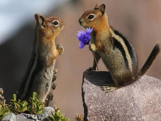 Tình yêu đẹp của loài vật 21661582